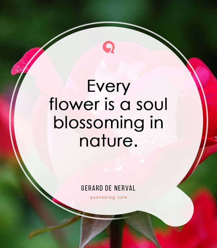 50 Beautiful Flower Quotes Pictures